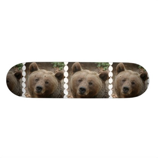 Monopatín del oso de Brown