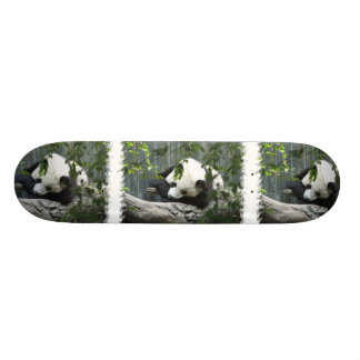 Monopatín del oso de panda skate board