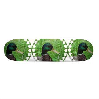 Monopatín del pato silvestre
