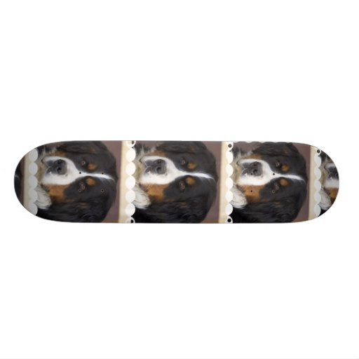 "Monopatín del perro de montaña de Bernese Patineta 7 3/4"""