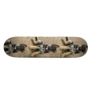 Monopatín del perro de perrito del pastor alemán skateboards