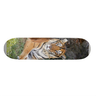 Monopatín del tigre de Bengala 002