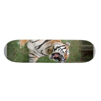 Monopatín del tigre de Bengala 006