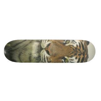 Monopatín del tigre de Sumatran
