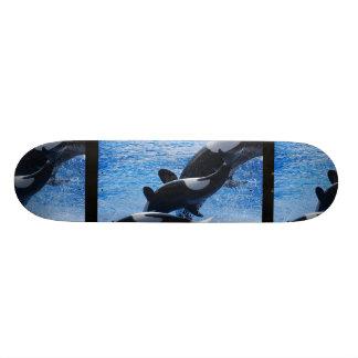 Monopatín del trío de la orca