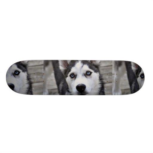 """Monopatín fornido del perrito patineta 8 1/2"""""""