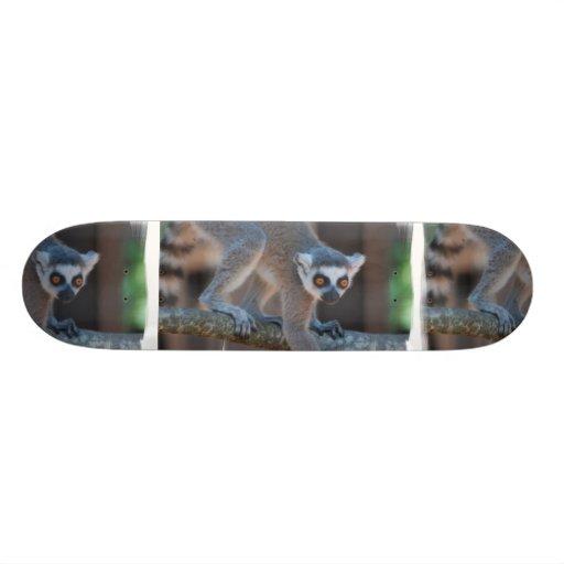 Monopatín joven del Lemur