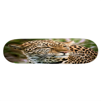 Monopatín manchado del leopardo