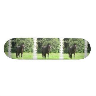 Monopatín oscuro del caballo de bahía