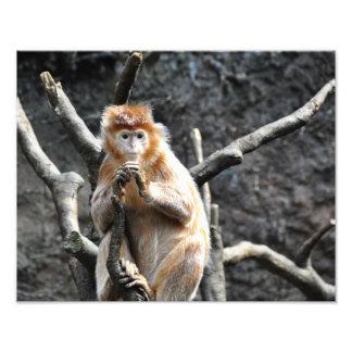 Monos de la mermelada foto