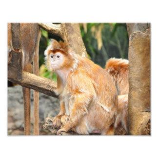 Monos de la mermelada impresión fotográfica