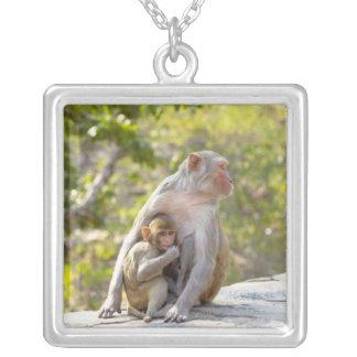 Monos de Macaque del macaco de la India de la Collar Plateado