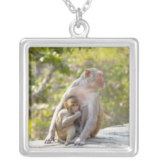 Monos de Macaque del macaco de la India de la madr Grimpola