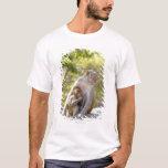 Monos de Macaque del macaco de la India de la Playera