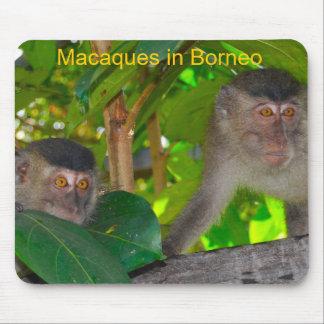 Monos de Macaque en Borneo Tapete De Raton