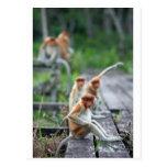 Monos de probóscide divertidos postal