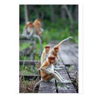 Monos de probóscide divertidos tarjeta postal