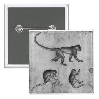 Monos, del álbum de Vallardi Pin