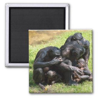 Monos del Bonobo Imán Para Frigorífico