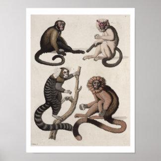 Monos litho del color poster