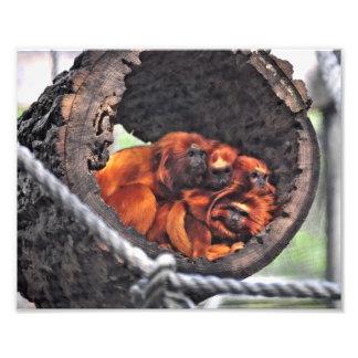 Monos rojos de la hoja foto