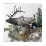 "Monster bull trophy buck ceramic tile<br><div class=""desc"">Bull elk and trophy buck deer. Wildlife,  the animals in the forest. Looking left</div>"