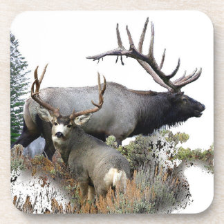 Monster bull trophy buck coaster