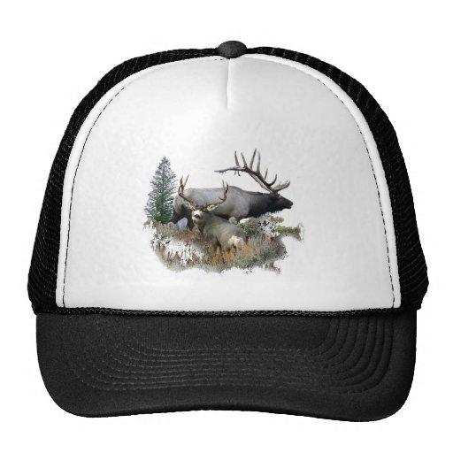 Monster bull trophy buck trucker hats
