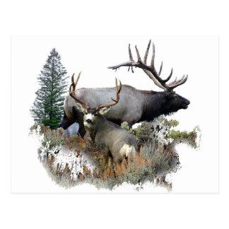 Monster bull trophy buck postcard