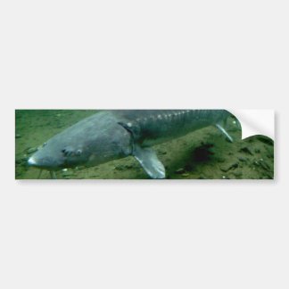 Monster Fish Bumper Stickers