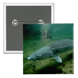 Monster Fish Pinback Button