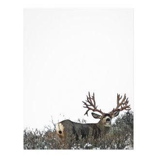 Monster mule deer 2 letterhead