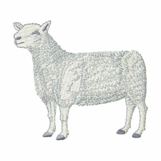 Montadale Sheep