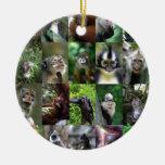 Montaje del primate del mono ornato
