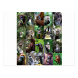 Montaje del primate del mono postal