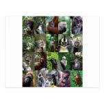 Montaje del primate del mono postales