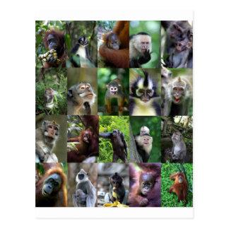 Montaje del primate del mono tarjeta postal