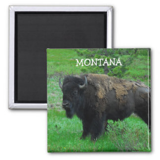 Montana Bison magnet