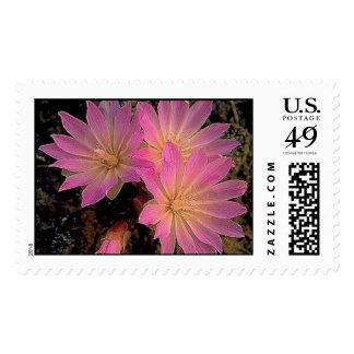 Montana Bitterroot Postage Stamps