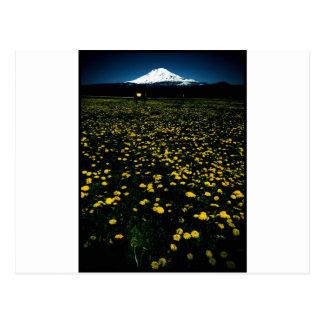 montaña de la flor del diente de león tarjeta postal