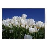 Montaña de tulipanes en un cielo azul perfecto tarjeta