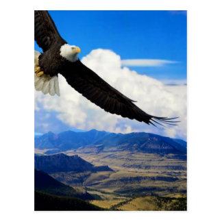 Montana eagle postcard