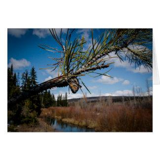 Montana Holiday Pine Cone Greeting Card