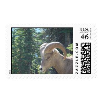 Montana Mountain Goat Stamp