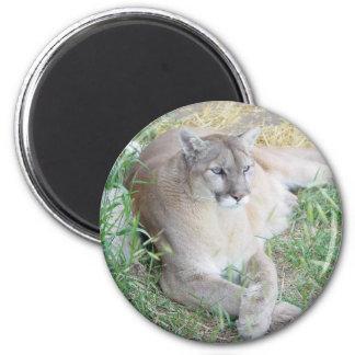 Montana Mountain Lion 2 Inch Round Magnet
