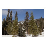Montana Mountain Trails in Winter Landscape Photo Poster