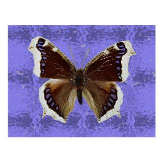 Montana Mourning Cloak Butterfly Postcard