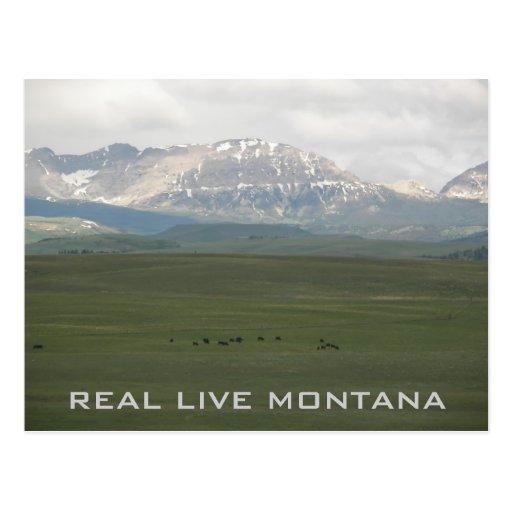 Montana real vive tarjetas postales