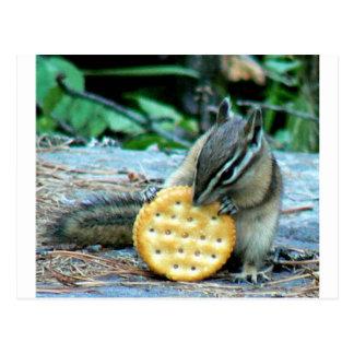 Montana Squirrel Postcard
