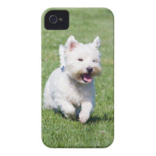 Montaña Terrier blanco del oeste, foto linda del p iPhone 4 Protectores